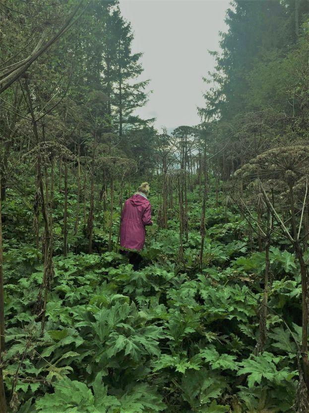 Jättelokor som växter högt över en vuxen kvinna i en lila kappa.