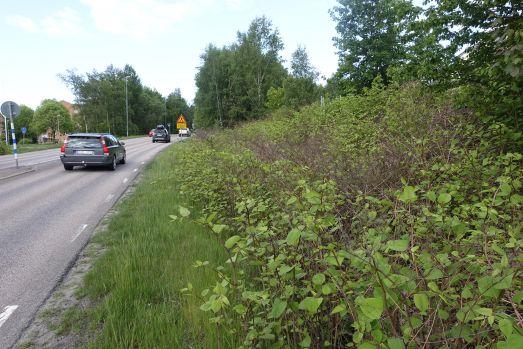 Tät vegetation av parkslide vid väg med bilar på.